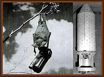 Bomb Bats