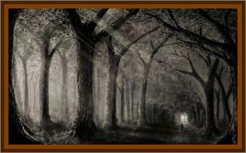 Brieselang Forest Light