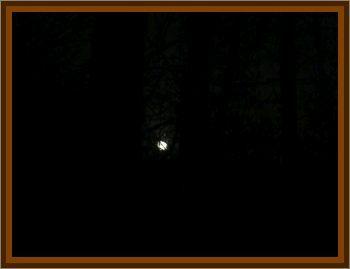 Maple Lake Lights